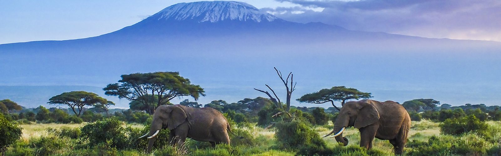 Elephants in Kilimanjaro