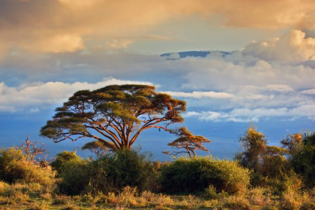 The Routes of Kilimanjaro