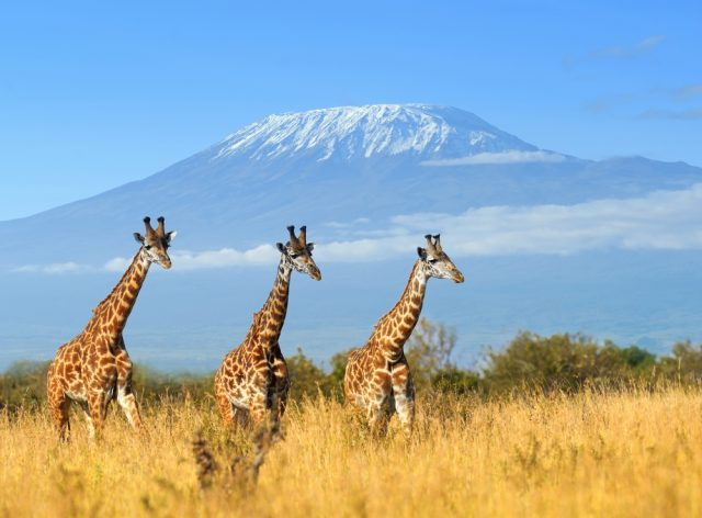 Tips for Getting to Tanzania